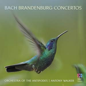 JS Bach: Brandenburg Concertos & Sinfonias from the Cantatas Product Image